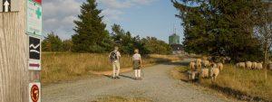 Wanderwege führen durch die Astenheide auf dem Kahlen Asten
